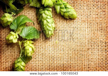 Hop branch close-up over Burlap background. Beer production ingredient. Beautiful vintage backdrop of fresh hops over shabby sack linen texture. Brewing concept. Retro style