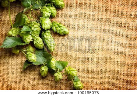 Green Hop on burlap texture. Plant of hop with leaves and whole cones  close-up.  Brewing beer ingredients. Brewery concept. Retro and vintage toned. Shabby sack linen texture background. Your text