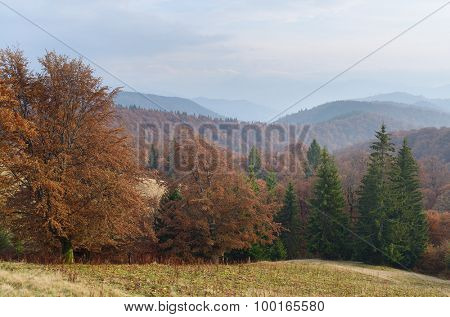 Autumn landscape with a forest in the mountains. Day haze. Carpathians, Ukraine, Europe