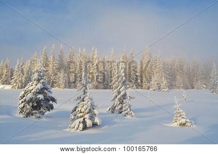 Winter forest covered with snow. Christmas landscape. Fabulous trees in snowdrifts. Sunlight through the mist. Carpathian mountains, Ukraine, Europe