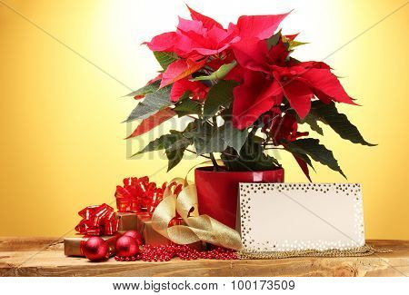 beautiful poinsettia in flowerpot, postcard, gifts and Christmas balls on wooden table on yellow background