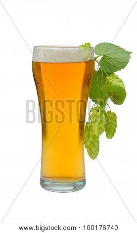 Full glass of light beer with hops