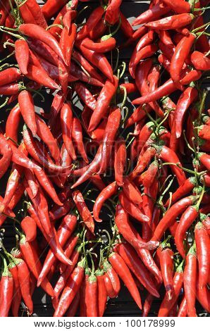 Red hot chili peppers on market