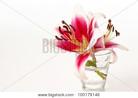 Red White Lilies In Vase, White Background, Copy Space