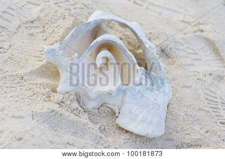 Sandy Shell