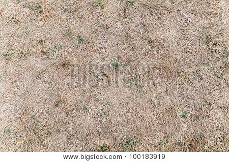 Dry Grass With Green Plants, Background Texture