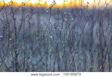 Dry Flowers On A Background Sunset
