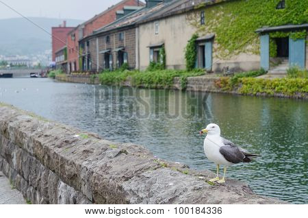 Seagull Standing On A Rock At Otaru Canal Hokkaido