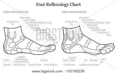 Foot Reflexology Profile Side Description Outline