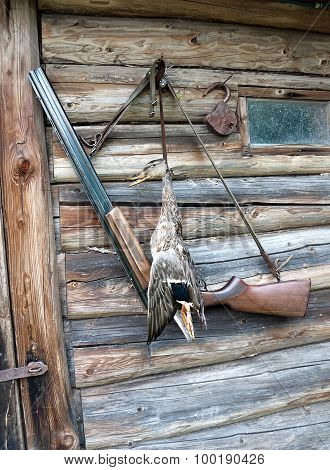 Wild Duck Hunting Trophy And A Hunting Rifle