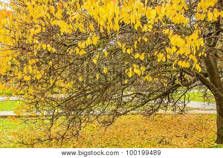 Picturesque Tree With Autumn Leaves In The Park