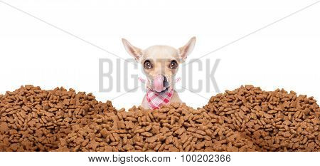 Hungry Dog  Behind Mound Food