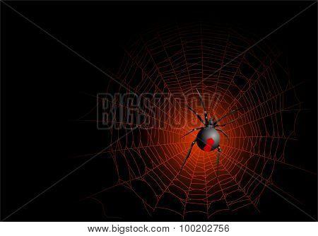 Illustration of spooky spider on web
