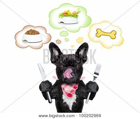 Hungry Dog   With Speech Bubble