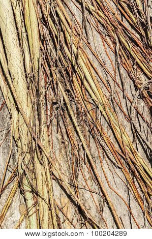 Tree Roots 2