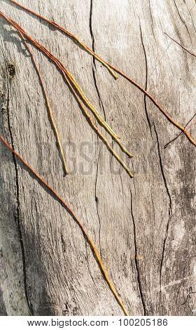 Tree Roots 3