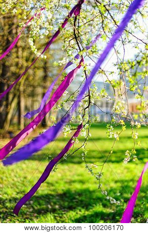 Blooming branch decorated with purple ribbons