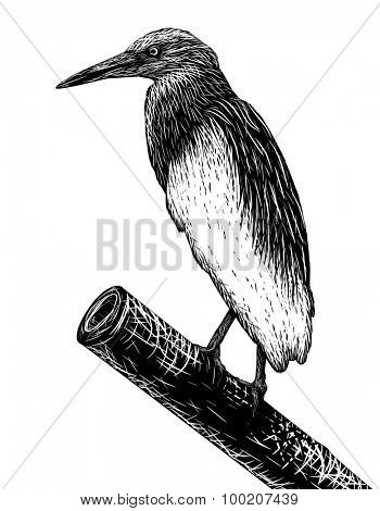 Illustrated sketch of a pondheron in scratchboard style