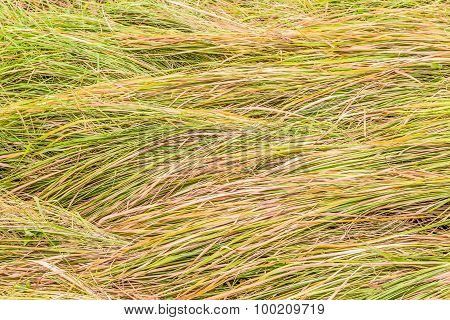 Grass Falling To The Same