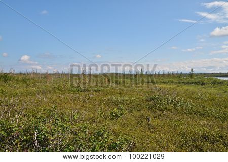 Tundra On The Taimyr Peninsula.