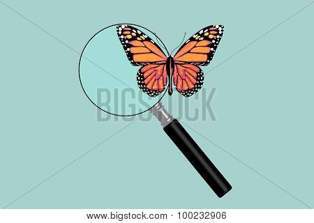 Flat Conceptual Illustration Of Butterfly With Magnifying Glass