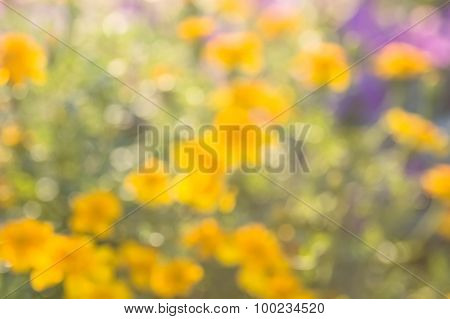 Blurred abstract background flower field
