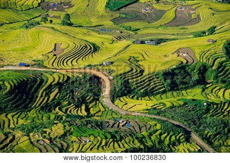 Terraced rice field in rice season in Laocai, Vietnam