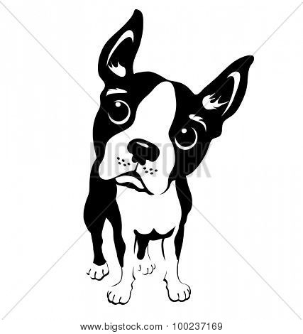 cartoon illustration of a boston terrier dog