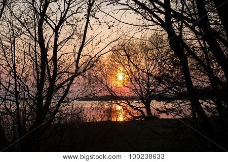Sunset and tree silhouette in the forest