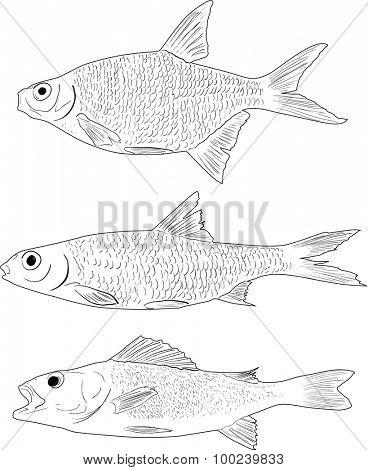 set of three freshwater fishes isolated on transparent background