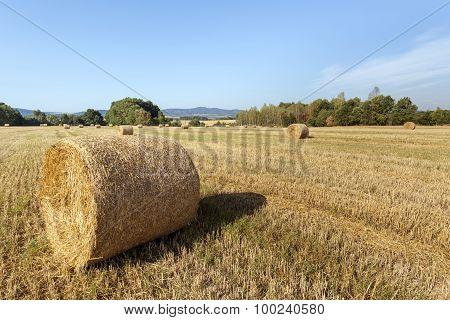 Agricultural Summer  Landscape