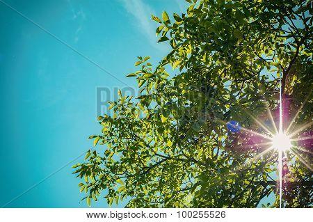 Cherry tree in the rays of sun