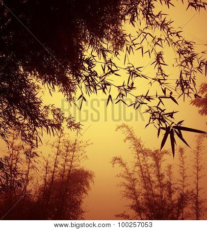 silhouette Bamboo Forest China Environment Concept