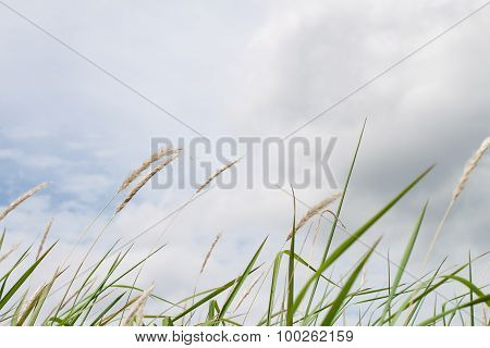 Dry Grass And Cloudy Sky