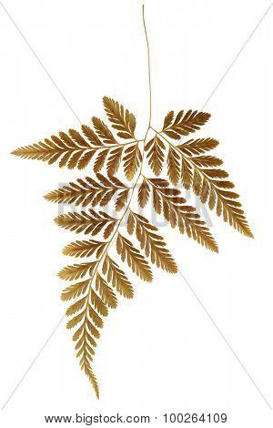 Dry Fern Leaf on White Background