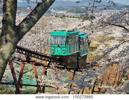 Slope car passing through tunnel of cherry blossom (Sakura)