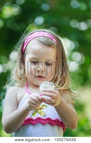 Toddler girl with white Taraxacum officinale or common dandelion seeds