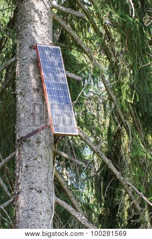 Solar Panel Attached To A Large Tree