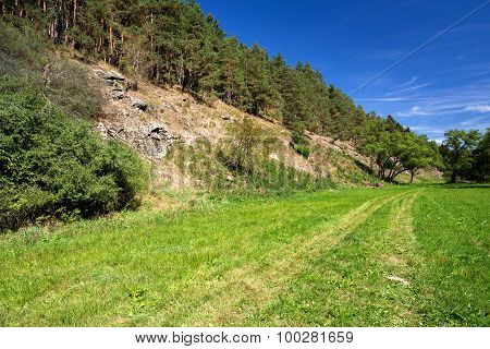 Rural Scene With Path And Forest
