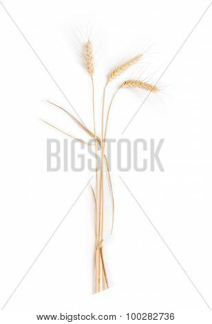 Three Stems Of Wheat With Spikelet On A Light Background
