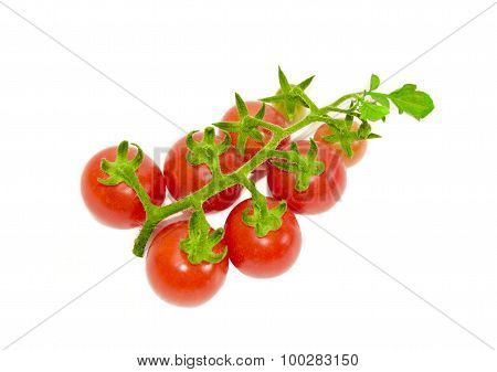 Branch Of Cherry Tomato On A Light Background