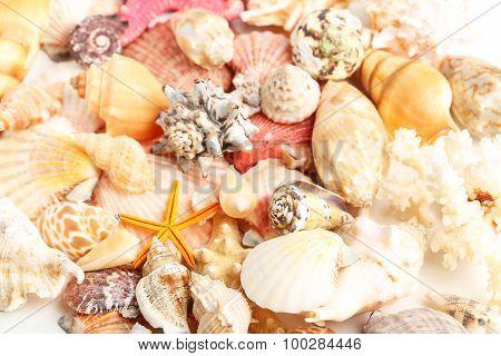 Sea Shells Background, Close Up
