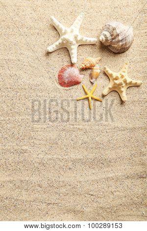 Sea Shells On A Beach Sand
