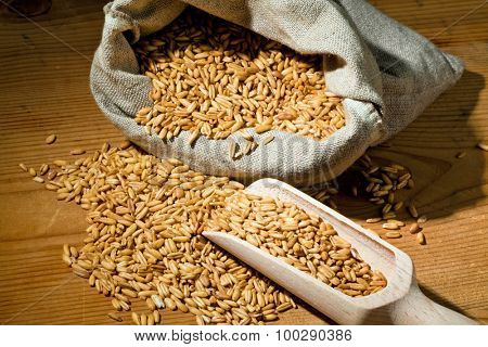 grains of oats. yields for cereals in agriculture