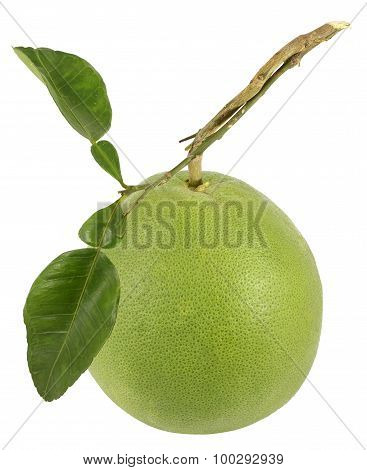 The Grapefruit With Stalk And Leaves On White Background Isolated