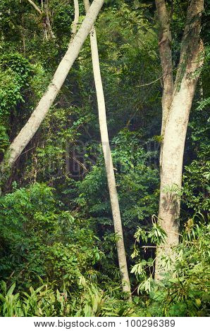 Forest in Escambray Mounatins, Villa Clara Province, Cuba.