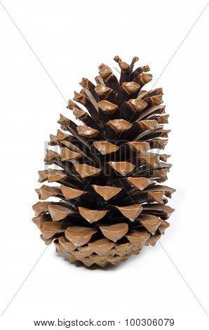 come pine