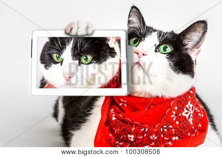 Cat with bandana