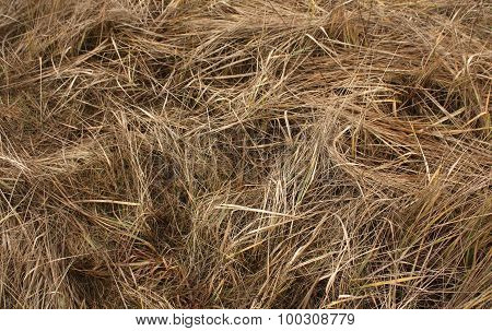 Faded Grass. Natural Background