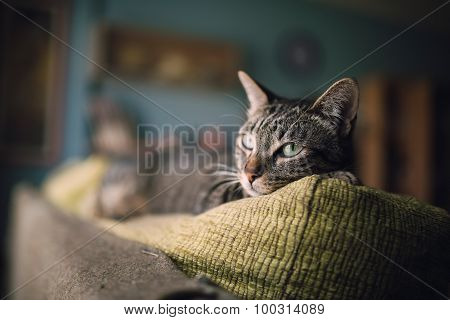 Tabby Cat On The Top Of A Couch